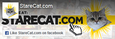 StareCat.com on facebook