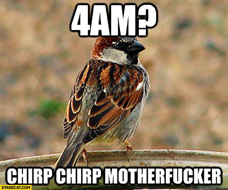 4 AM chirp chirp motherfucker. Bird singing early in the morning