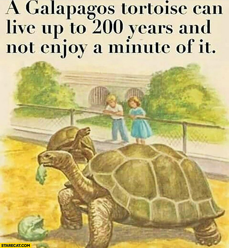 A galapagos tortoise can live up to 200 years and not enjoy a minute of it