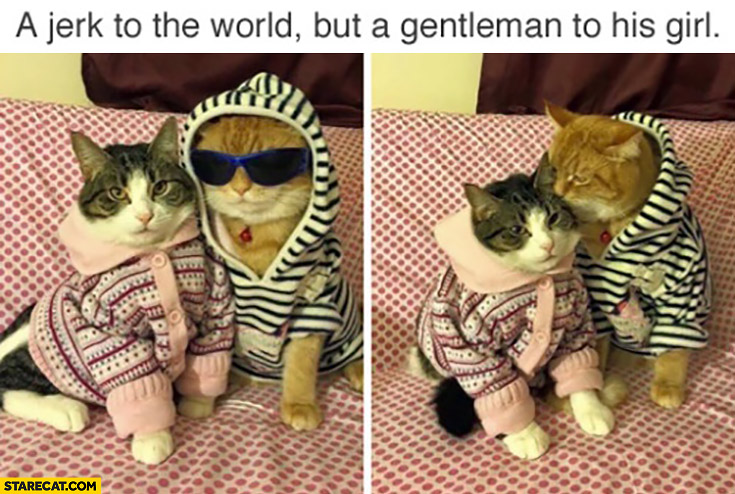 A jerk to the world but a gentleman to his girl. Cats wearing hoodies