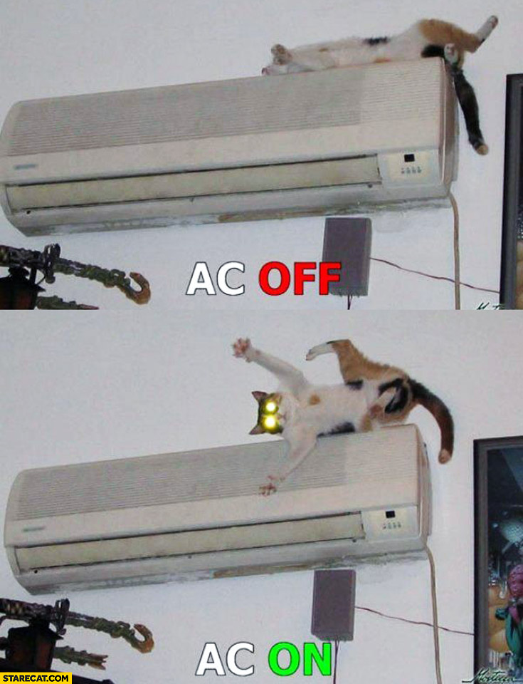 AC OFF ON cat