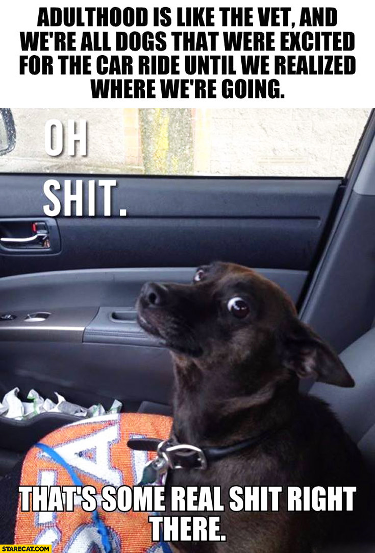 Adulthood is like the vet and we're all dogs that were excited for the car ride until we realized where we're going oh shit