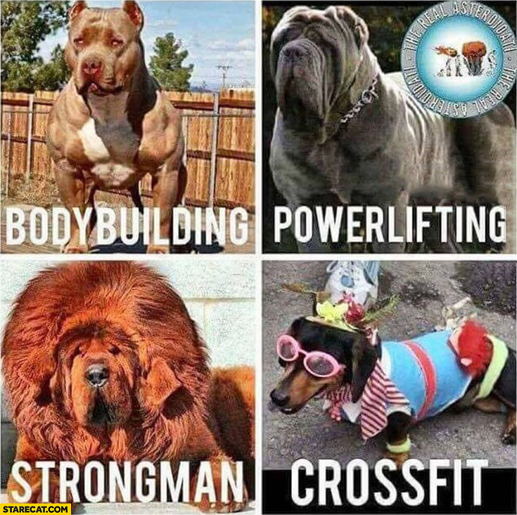 After gym dogs comparison: body building, powerlifting, strongman, crossfit