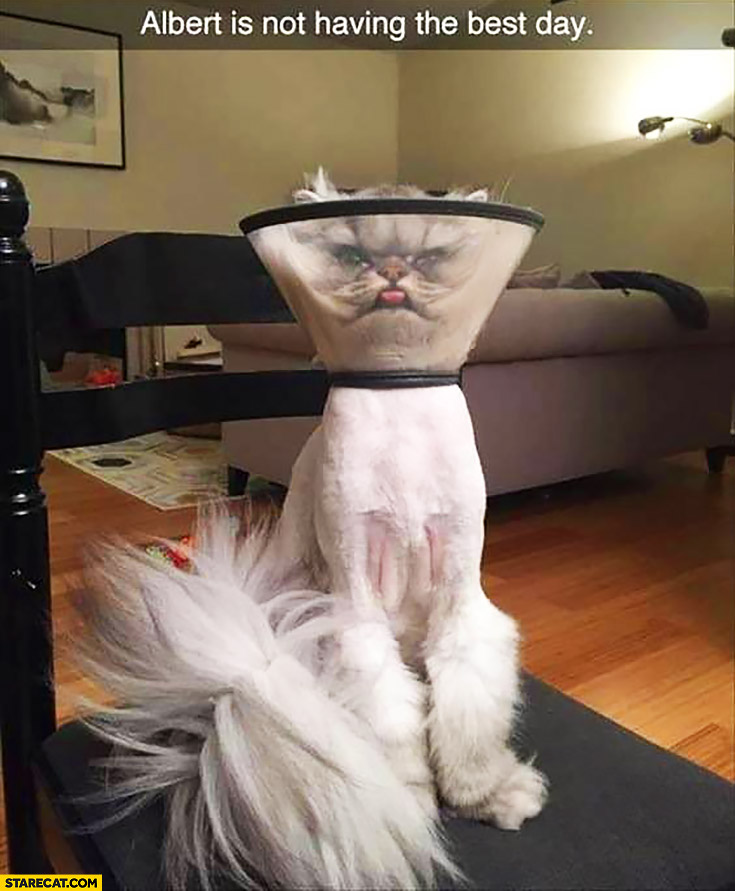 Albert is not having the best day cat lamp