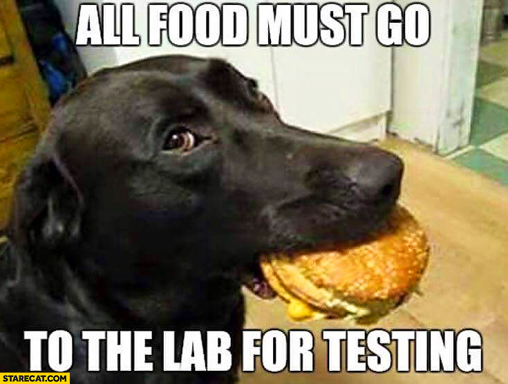 All food must go to the lab for testing dog with a burger