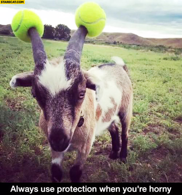 Always use protection when you're horny – goat with tennis balls on horns