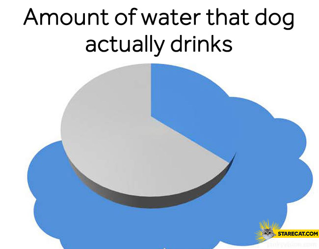 Amount percentage of water that dog actually drinks