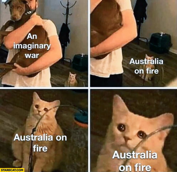 An imaginary war vs Australia on fire dog sad cat crying