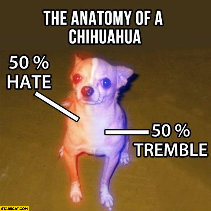 Anatomy of a chihuahua 50 percent hate 50 percent tremble