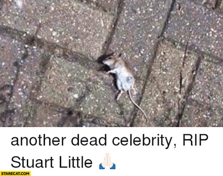 Another dead celebrity RIP Stuart Little