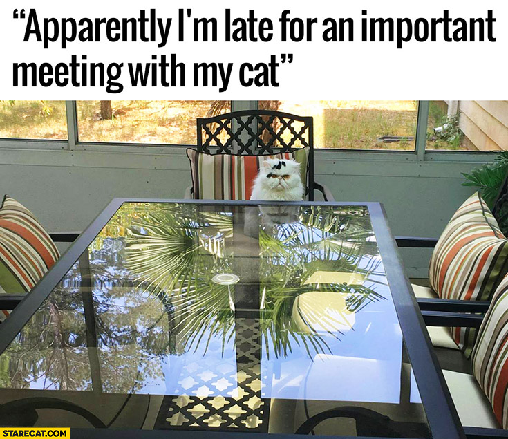 Apparently I'm late for an important meeting with my cat