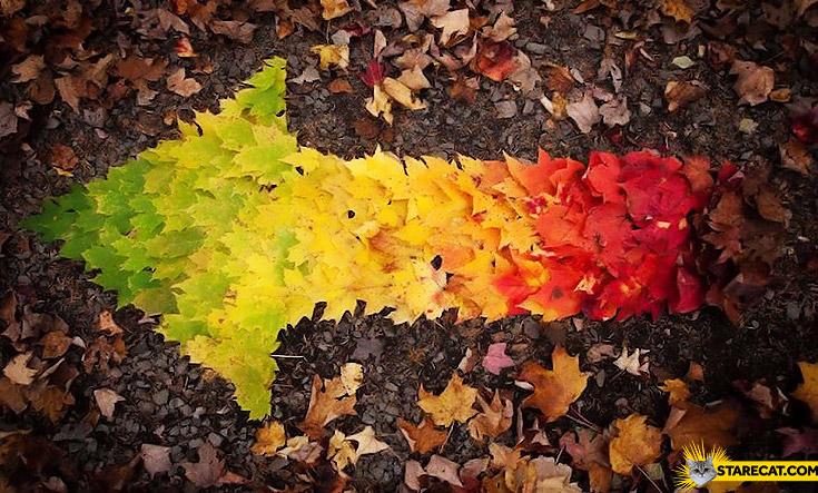 Arrow made of leafs