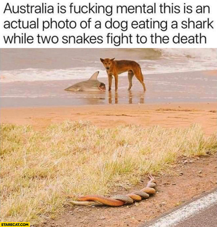 Australia is mental, this is and actual photo of a dog eating a shark wile two snakes fight to the death