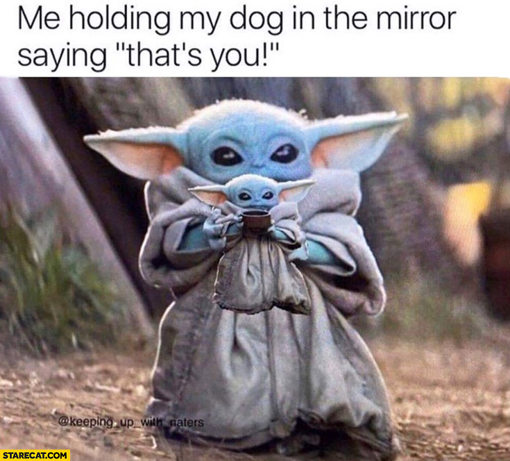 Baby Yoda me holding my dog in the mirror saying that's you