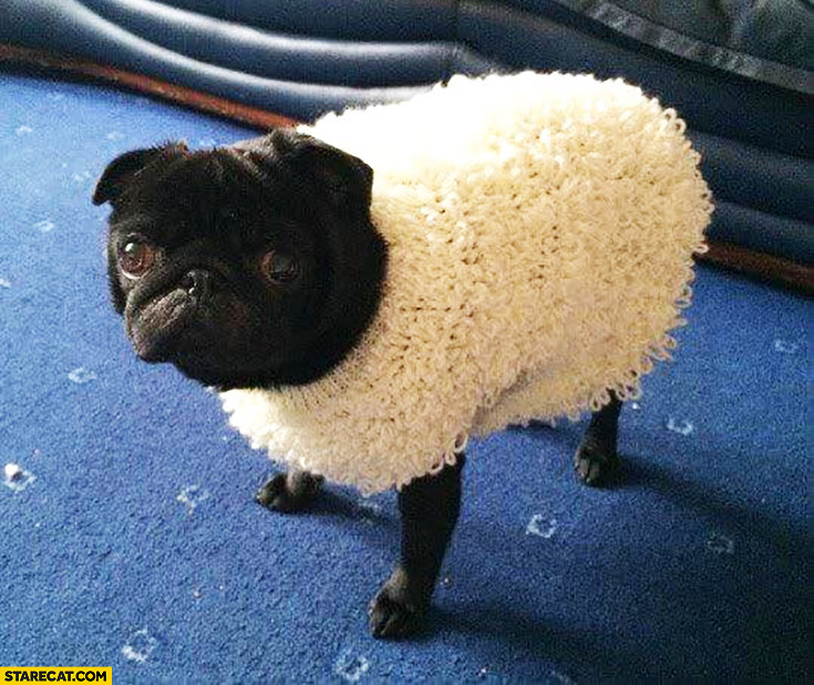 Bad to the bone dog pug dressed as a sheep