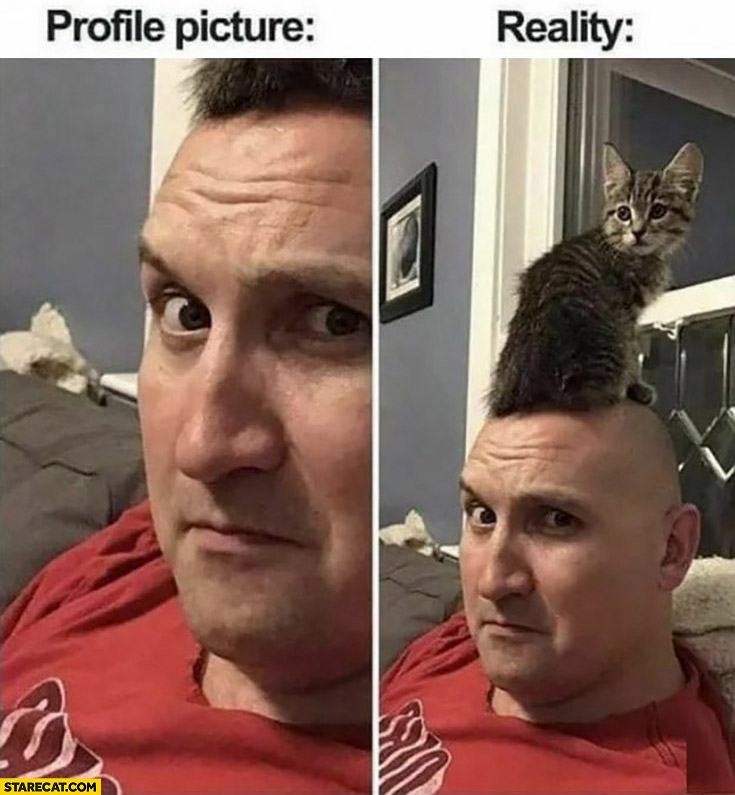 Bald man profile picture vs reality cat sitting on his head