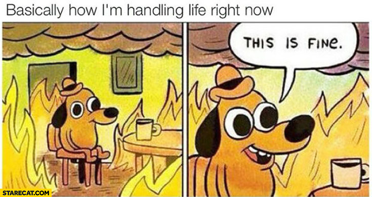 Basically how I'm handling life right now this is fine