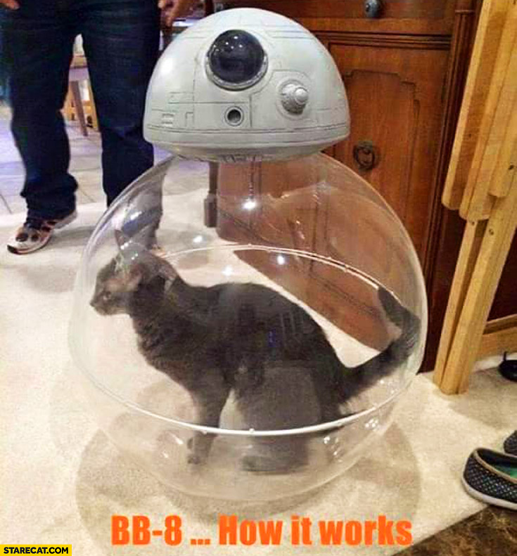 BB-8 how it works: cat inside the robot