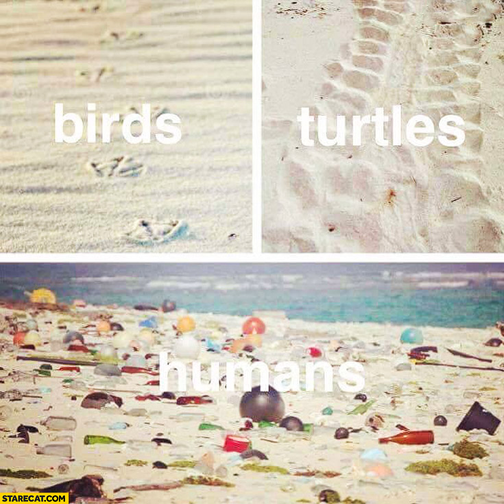 Beach footprint birds turtles humans trash