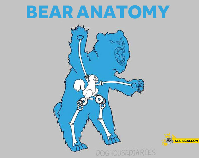 Bear anatomy
