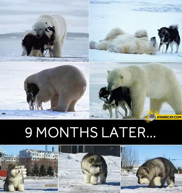 Bear dog nine months later dogbear