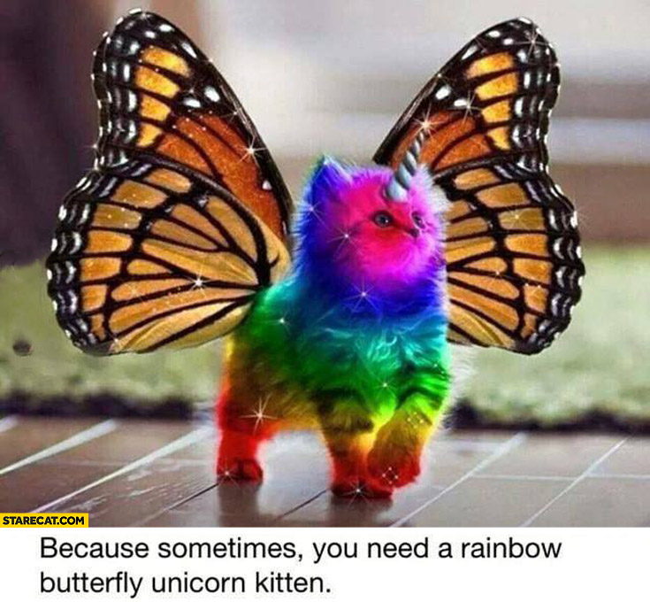 Because sometimes you need a rainbow butterfly unicorn kitten