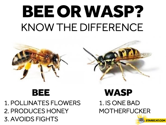 Bee or wasp the difference