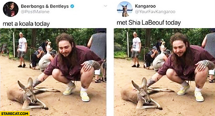 Beerbongs and Bentleys met a koala today, kangaroo met Shia LaBeouf today twitter