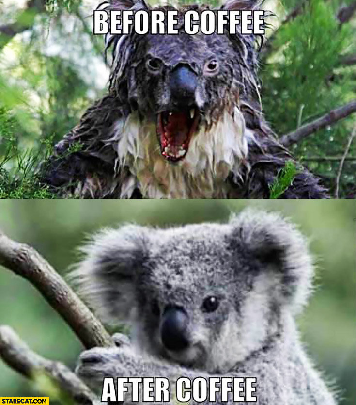 Before coffee – angry koala, after coffee – cute koala