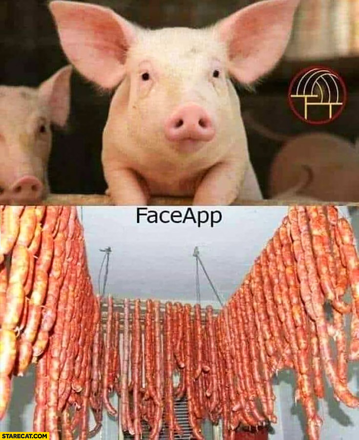 before FaceApp cute pig after FaceApp pork