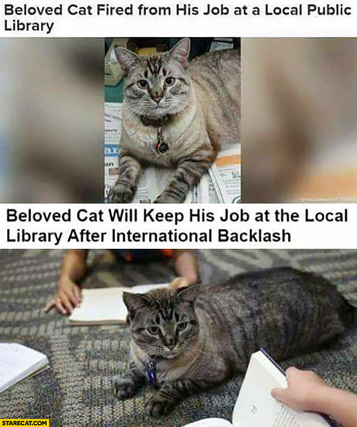 Beloved cat fired from his job at a local public library, beloved cat will keep his job at the local library after international backlash