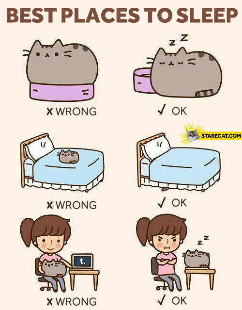 Best places to sleep Pusheen