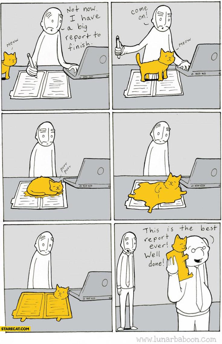 Best report ever cat