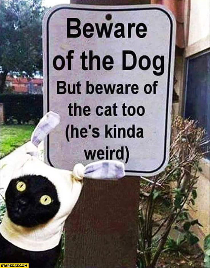 Beware of the dog but beware of the cat too he's kinda wird