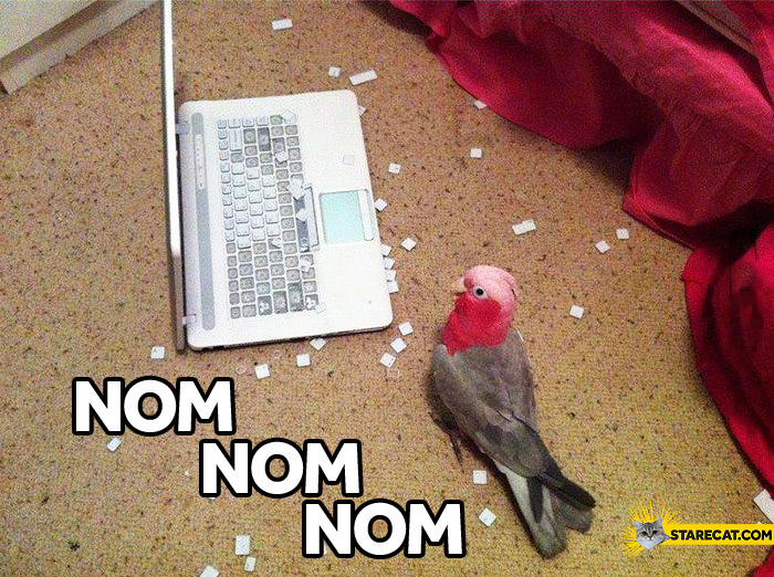 Bird keyboard nom nom nom