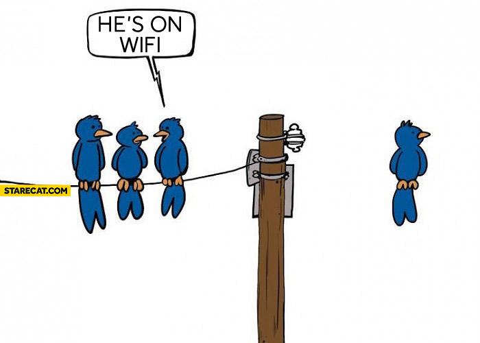 Bird on wifi