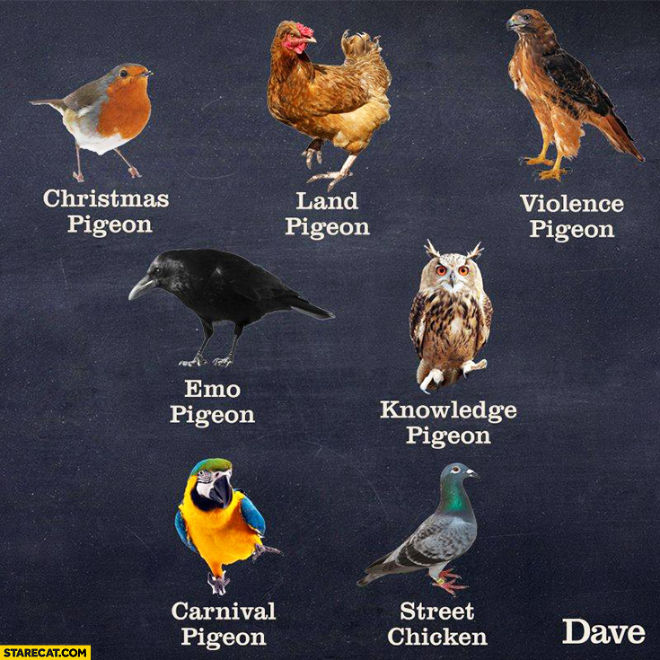 Birds: types of pigeons: Christmas pigeon, land pigeon, violence pigeon, emo pigeon, knowledge pigeon, carnival pigeon, street pigeon