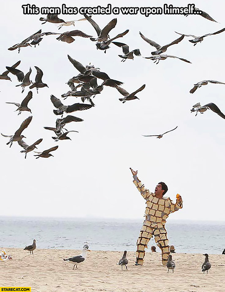 Birds vs man covered in bread this man created a war upon himself