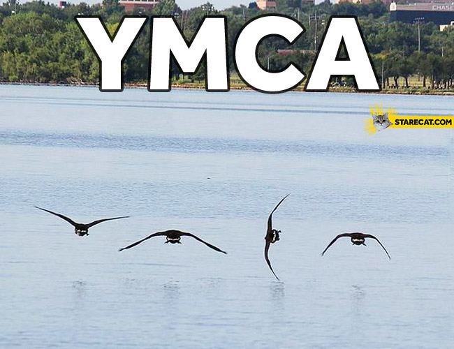 Birds YMCA