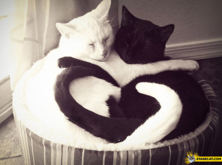 Black and white cats tails heart shape love
