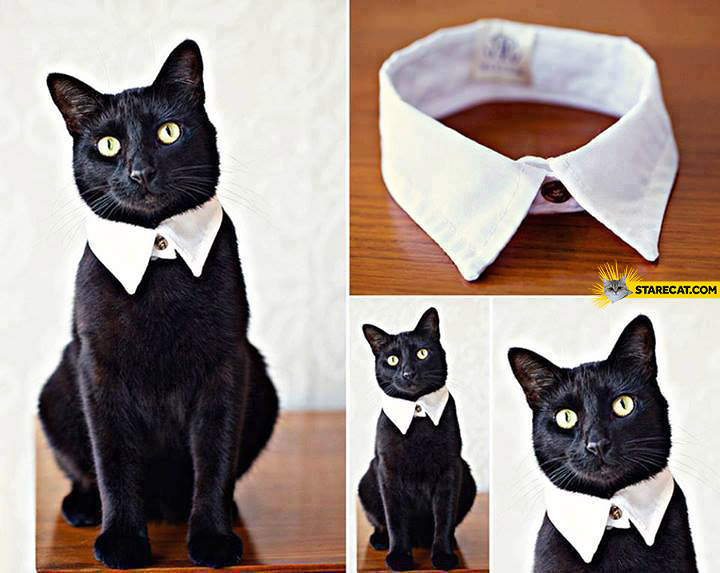 Black cat white collar