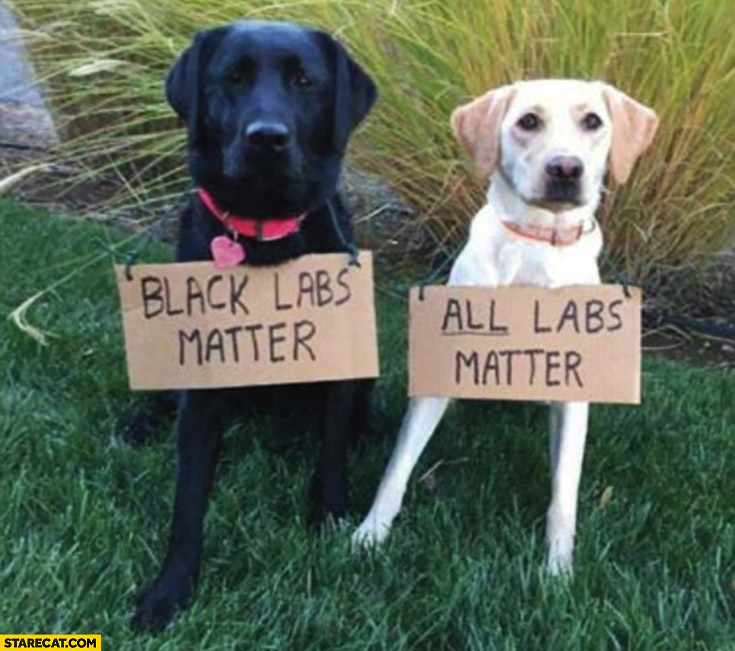 Black labs matter all labs mater black and white labrador retriever