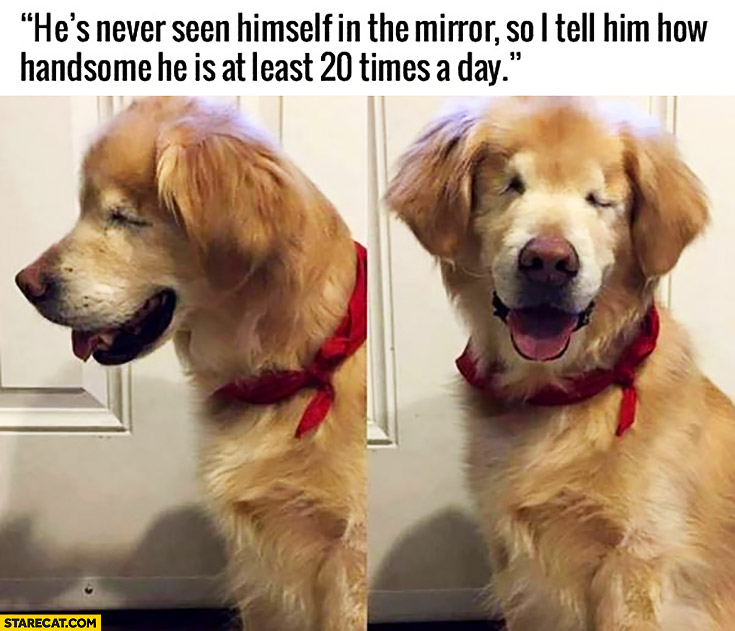 Blind dog he's never seen himself in the mirror so I tell him how handsome he is at least 20 times a day