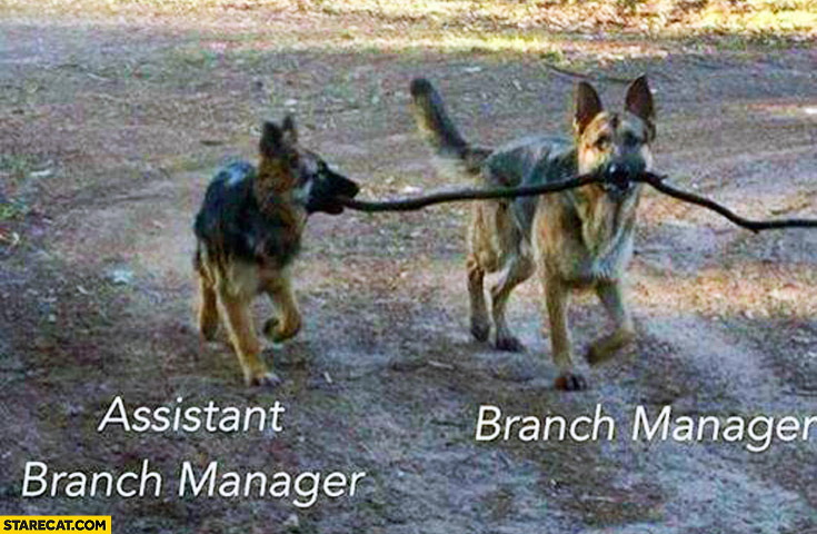 Branch manager Assistant branch manager dogs