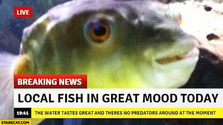 Breaking news local fish in great mood today