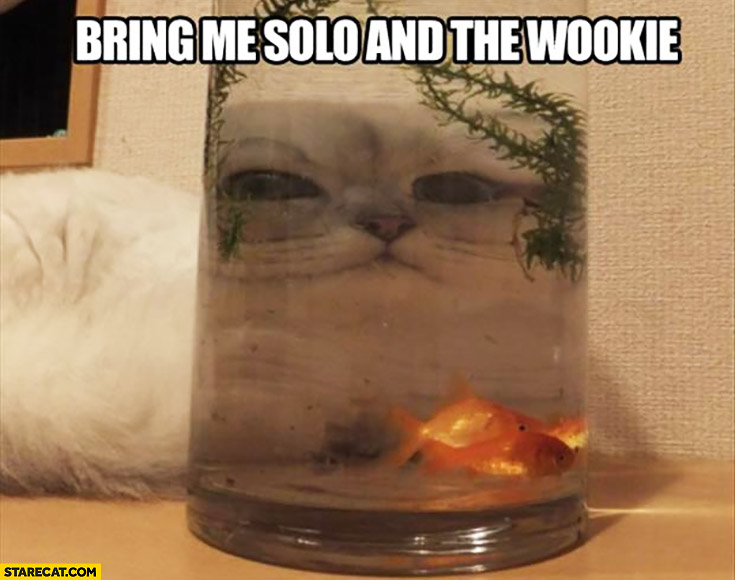 Bring me Solo and the Wookie cat Jabba looking through glass full of water