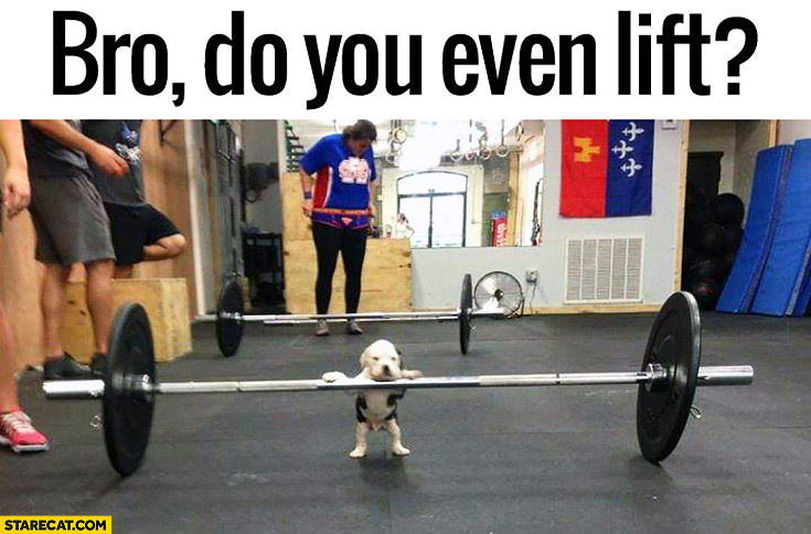 bro do you even lift cute puppy barbells starecatcom