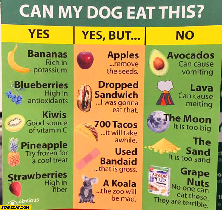 Can my dog eat this? Infographic: yes, yes but, no. List of ingridients