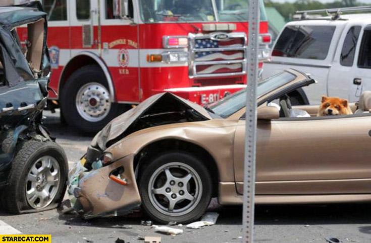 Car crash happy dog driver inside