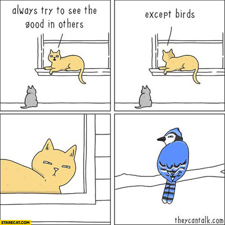 Cat always try to see the good in others except birds comic